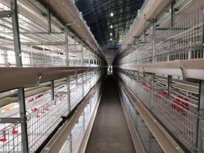 使用养鸡设备如何控制成本减少饲料浪费